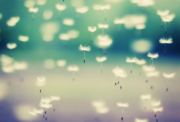 dandelion-flying-seeds-hd-wallpaper